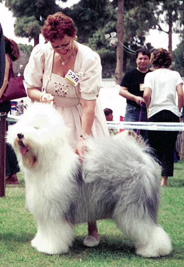 FCI European Dog Show, Israel 2001
